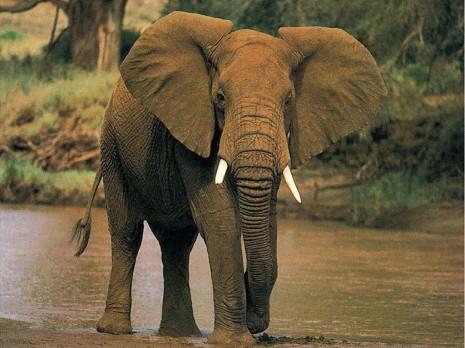 Significado-de-los-sueños-relacionados-con-elefantes