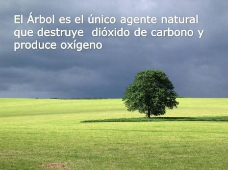 arbol0