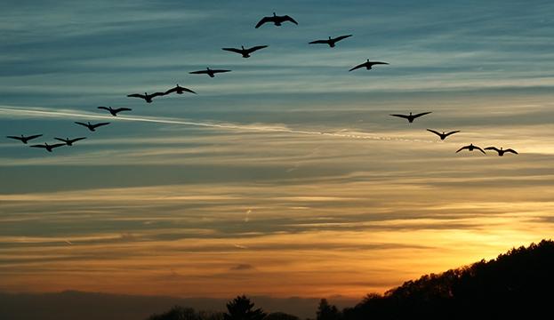 Resultado de imagen para aves migracion