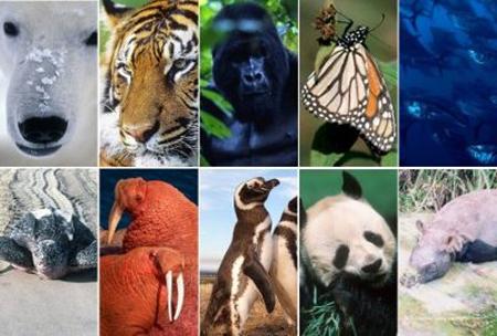Lista-de-animales-en-peligro-de-extincion