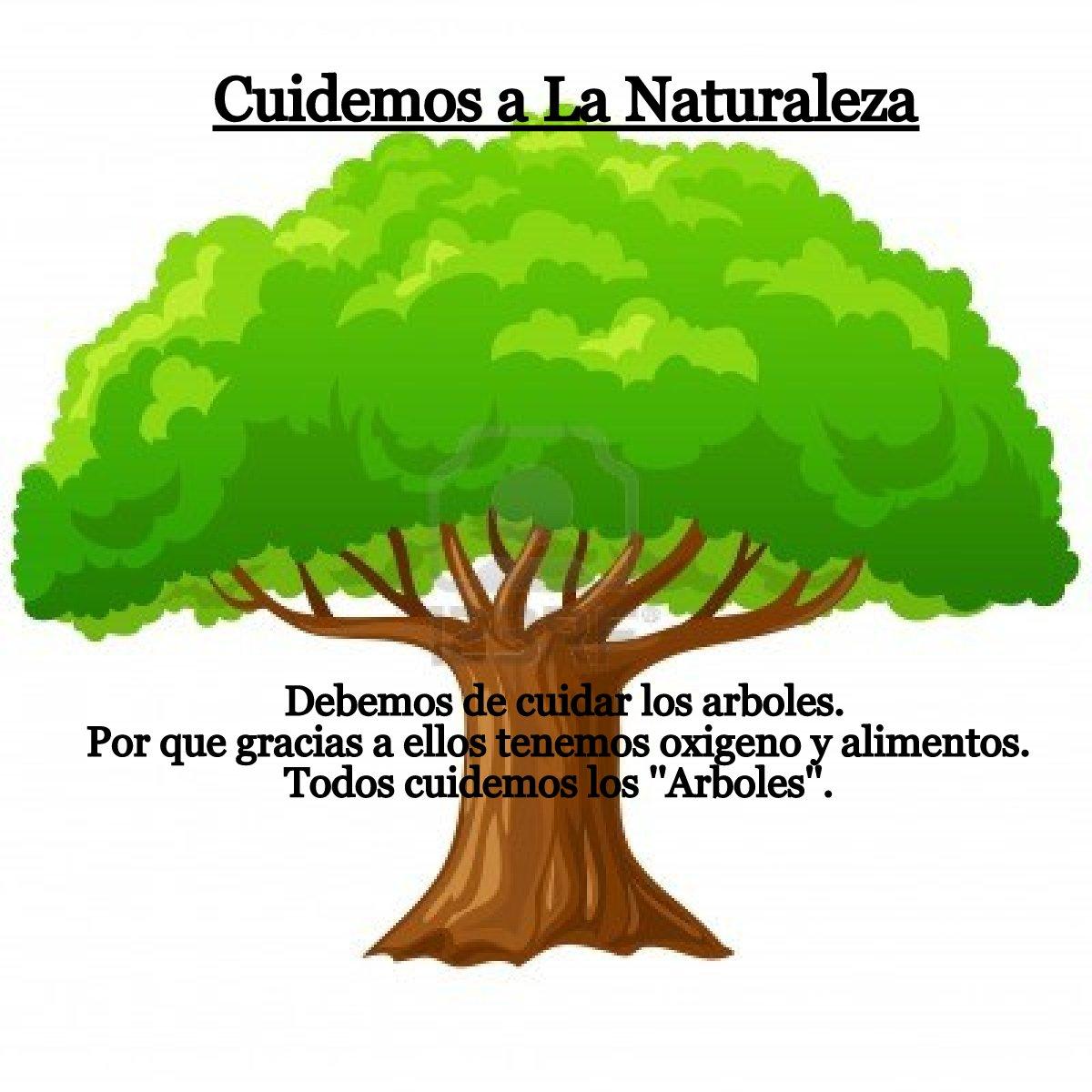 Porqu es da ina la deforestaci n como evitar la tala de for Como talar un arbol