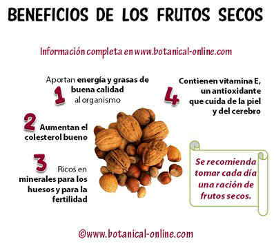 beneficios_frutos_secos