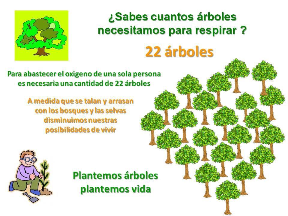 D a de la biodiversidad defendamos a los bosques el 22 de for Cuanto miden los arboles
