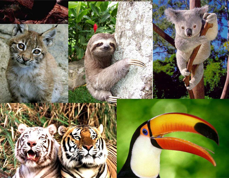 animales-especies-trafico