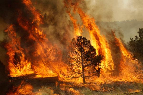 incendiosforestales