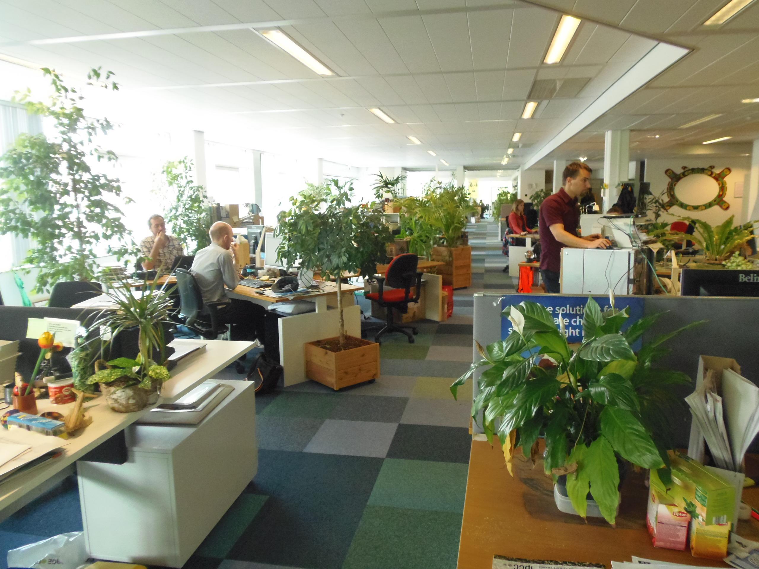 Casas ecol gicas y econ micas ideas para construir una for La oficina caracteristicas