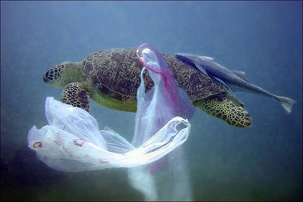 contaminacion-mares-plastico-tortuga