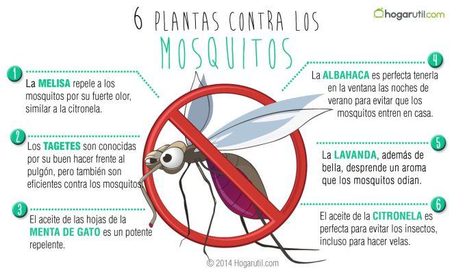 plantas-contra-mosquitos-660xXx80