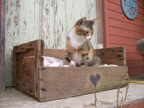 cajama-gato-caja-madera