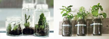vidrioplantas-frascos-vidrio-contufamilia