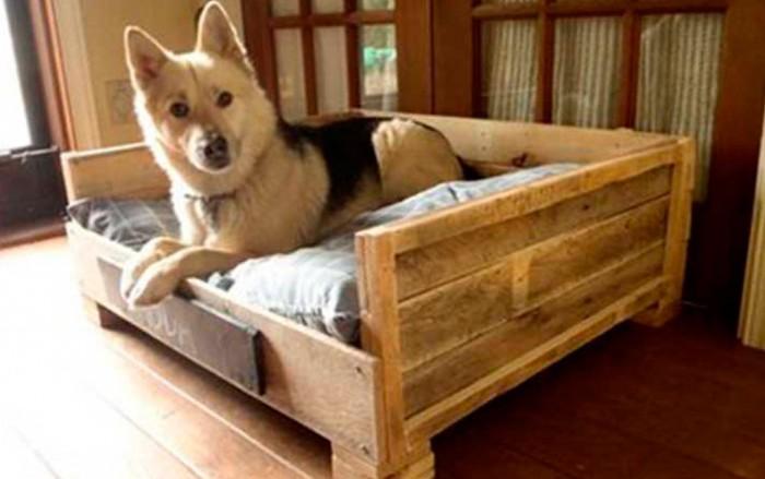 cama-para-mascota