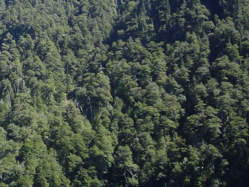 Bosque-Patagonia-800x600-FDG