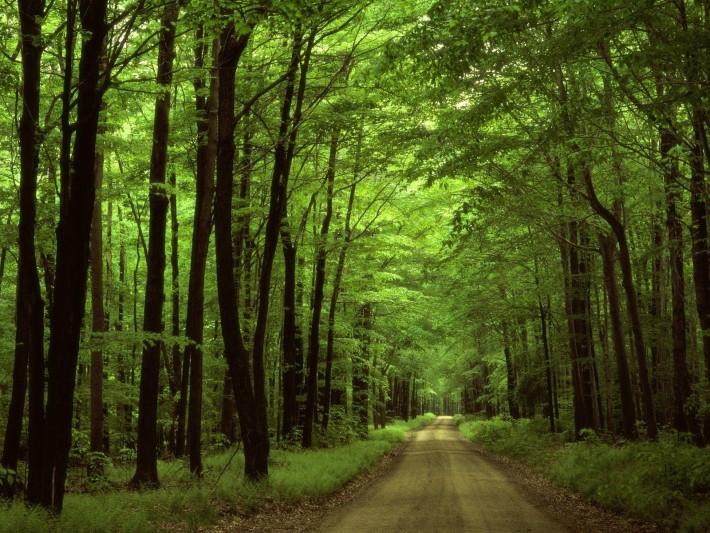 Camino-con-árboles1