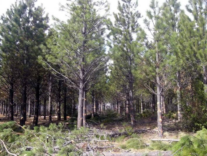 Forestaciones