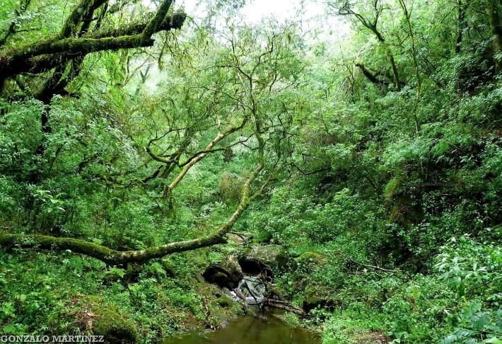 Fotos-Selva-Yungas-jungle-rainforest-bosques-forest-photos-Landscapes-paisajes-47