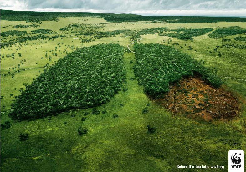 pulmon de la tierra