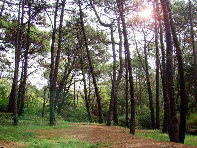 villa-gesell-buenos-aires-argentina-bosque