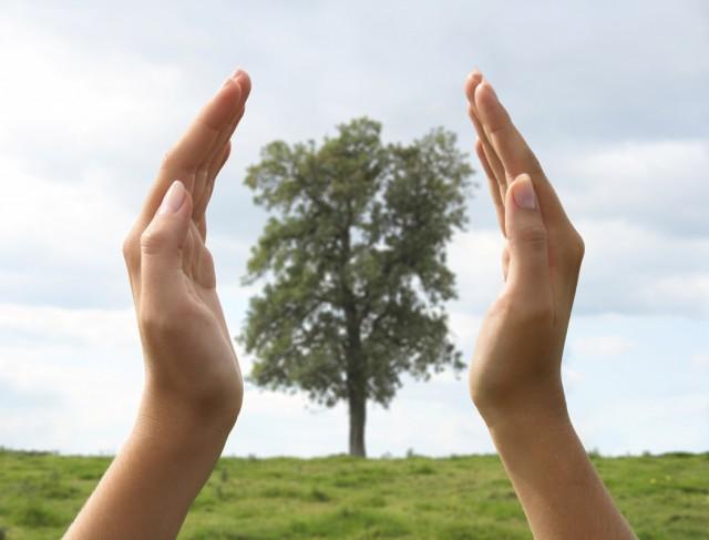 10-formas-de-cuidar-el-medio-ambiente