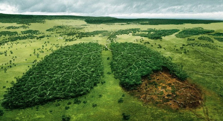 deforestacion-e1366330561351