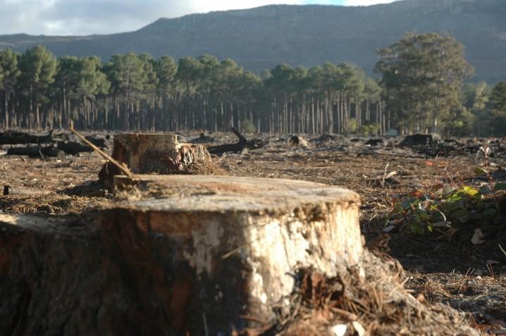 deforestacion-2