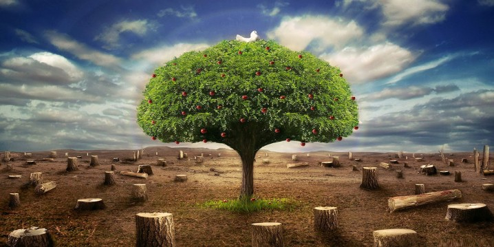 ecologia-4