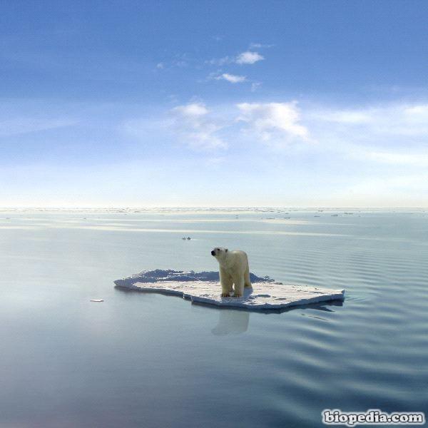 el-ultimo-osos-polar