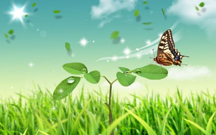 imagen-ecologia-emocional