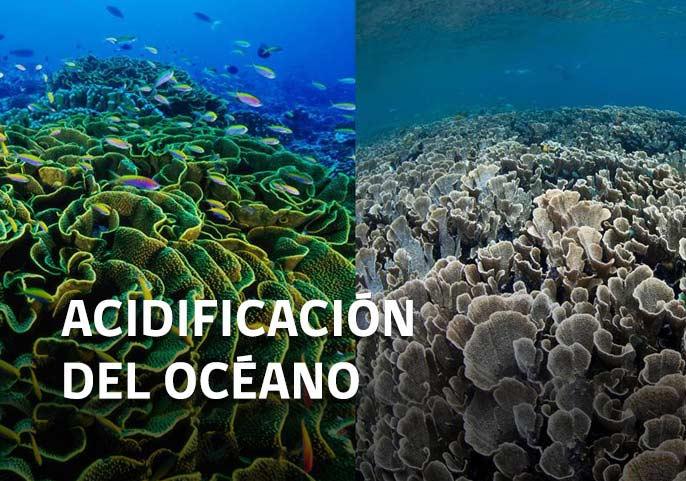 slides-acidificacion1