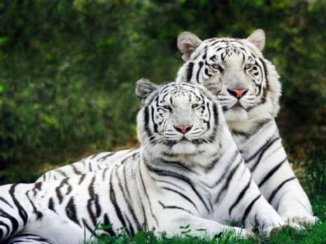 Animales-en-peligro-de-extincion12
