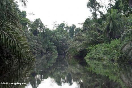 Gabon-26730