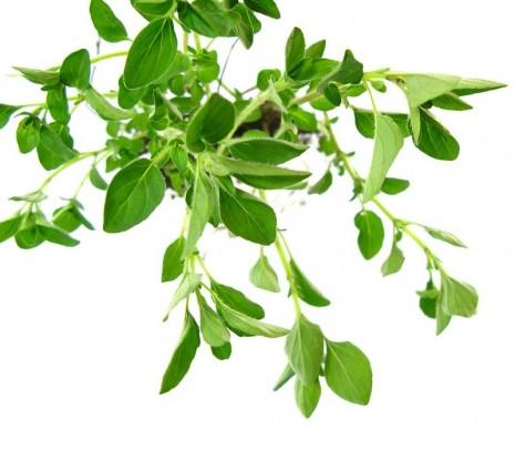 img_como_funcionan_las_plantas_medicinales_16945_orig