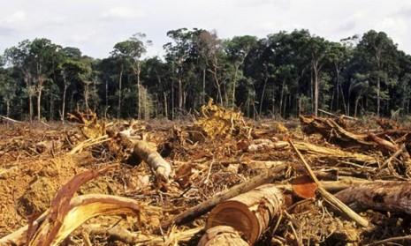 imagen-deforestacion