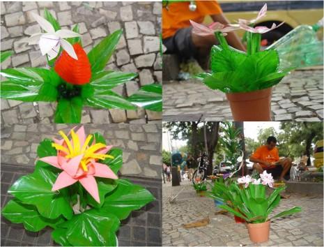 plantas_pet