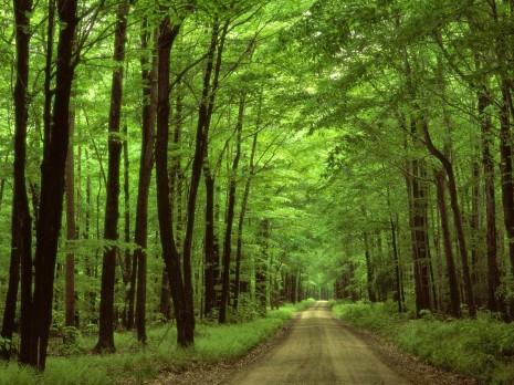 bosque frondoso 6