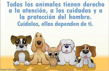 tarjetas-postales-tarjeta-de-cuidado-de-los-animales--635092240065324892