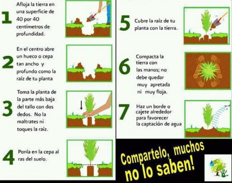 planta-un-árbol