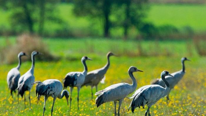 Aves-migratorias-Alemania_TINIMA20120920_0262_3