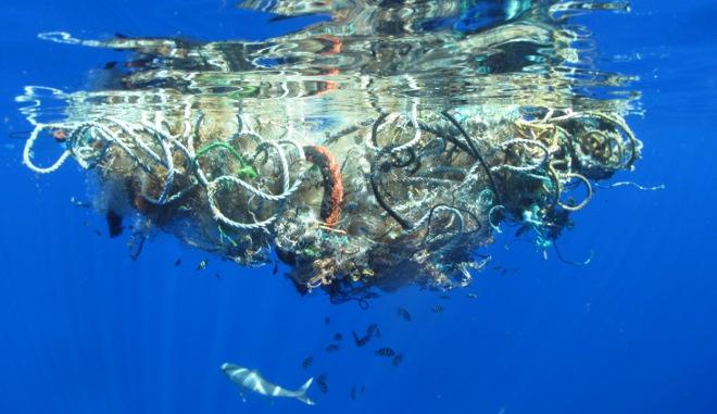 Muchos-peces-comen-plastico