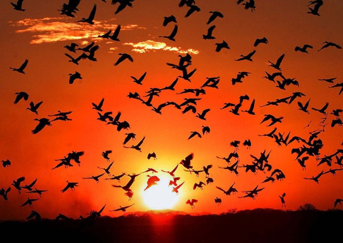 avesCosta-Rica-zona-aves-migratorias_LNCIMA20151120_0179_28