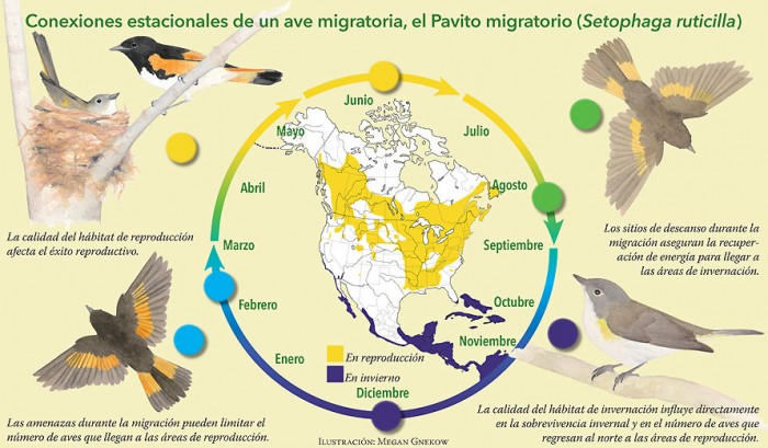 avesSP_p19_MigrationConnections_Large