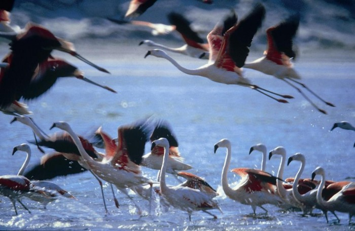 aves_migratorias_paracasperu