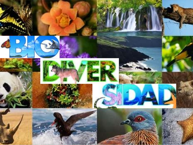 biodiversidad-biologia-201101-grupo235-1-638