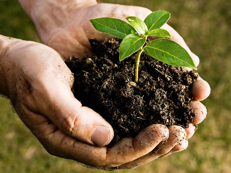 compost2plantje