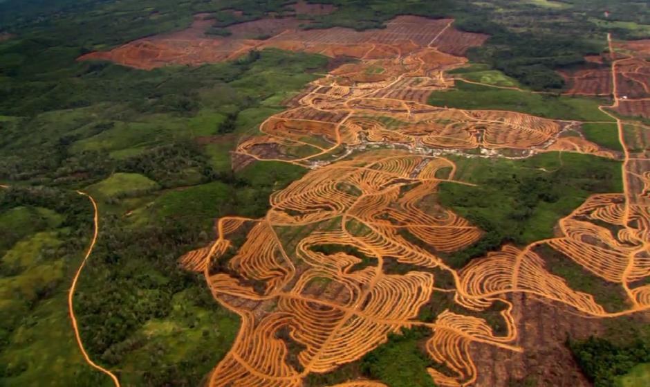 deforestacion21