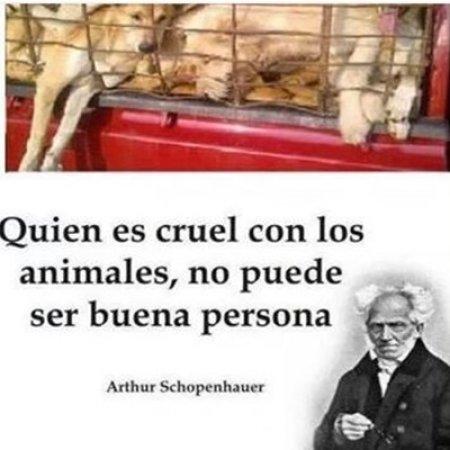 imagenes_bonitas_cuida_a_los_animales