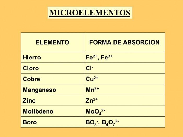 microslide_4