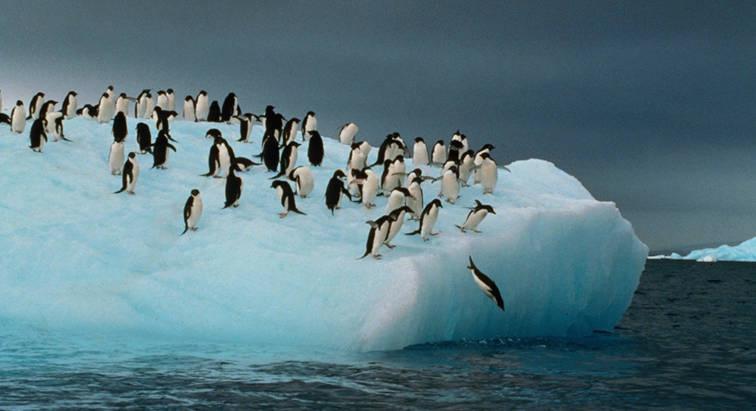 pinguinos antarticos