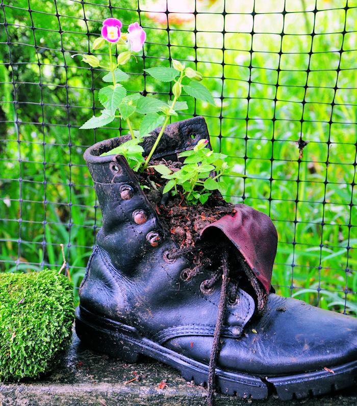 bota-vieja-de-piel-con-flores-boots-and-flowers-pot
