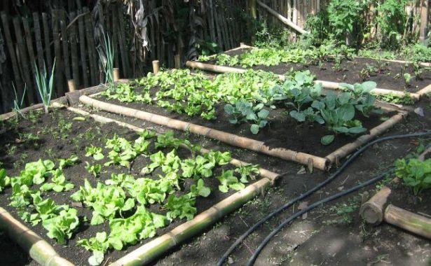 C mo fabricar una huerta en nuestra casa ecolog a hoy for Plantas para huerta organica