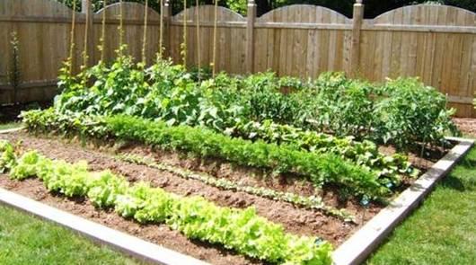 Consejos-para-hacer-un-huerto-ecológico-en-cualquier-lugar